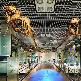 国立科学博物館 National Museum of Nature and Science,Tokyo