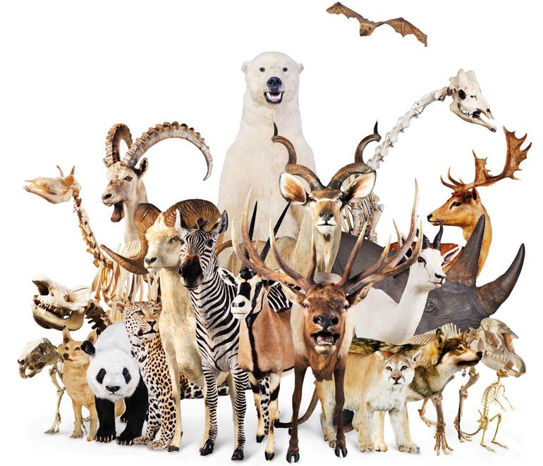 【肉食・草食・雑食】食性の違いに見る動物の特徴 …