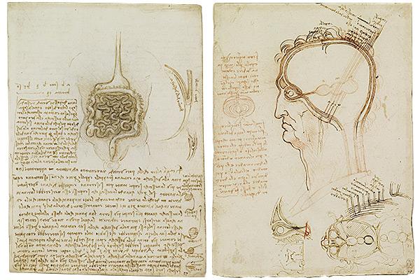 レオナルド・ダ・ヴィンチ「解剖手稿」より