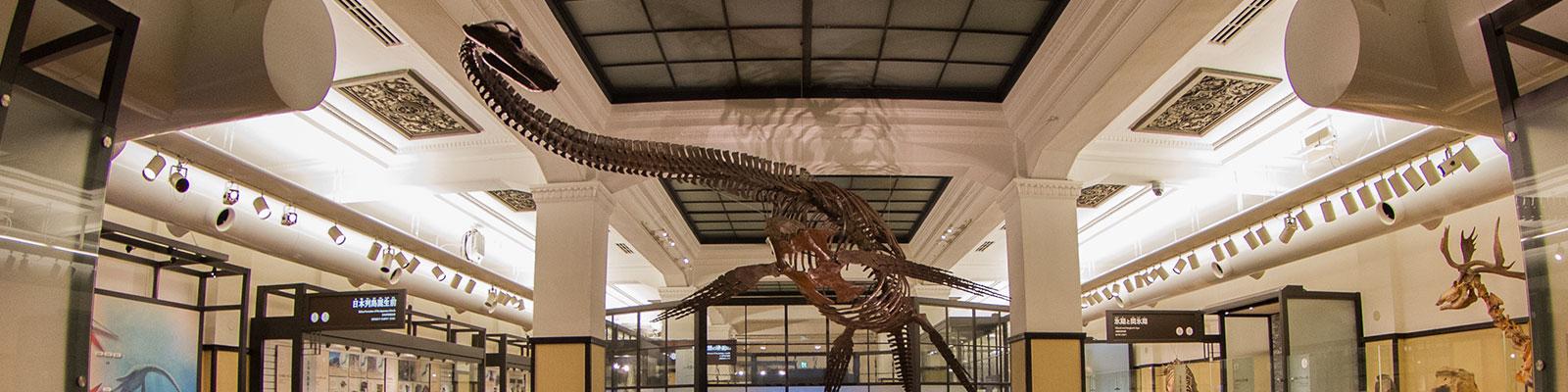 国立 科学 博物館 ホームページ